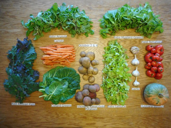 15. CSA week Veggie Share