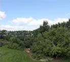 BnB - garden
