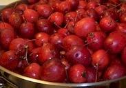 CSA - cherries